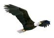 Soaring eagle.