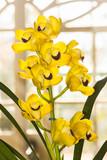 Orquídea IMG_9606