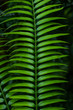 canvas print picture - green leaf plant