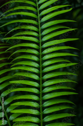 canvas print picture green leaf plant