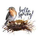 Watercolor lettering Hello spring bird card. Hand painted illustration with robin in the nest isolated on white background. Illustration for design, print, background. - 250508488