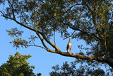 white stork perched on a big tree branch