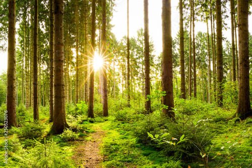 Beautiful forest in spring with bright sun shining through the trees - 250523076