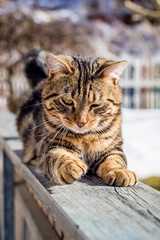 Portrait of a domestic cat in winter outdoors