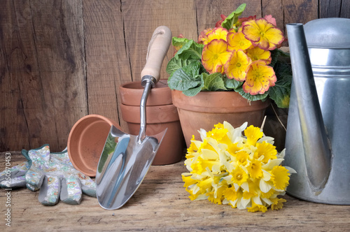 flowers potted and bouquet of daffodils with garden accessories on wooden background