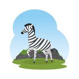african zebra in the savannah