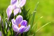 Leinwanddruck Bild - Blumen 1010