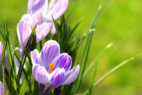 Leinwanddruck Bild Blumen 1010