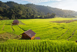 rice field scenery in Thailand - 250632002