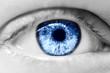 Quadro human blue eye macro