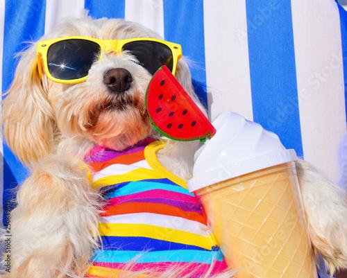 Leinwanddruck Bild funny dog with sunglasses