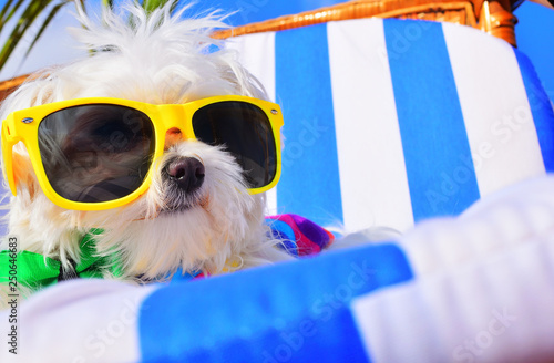 Leinwanddruck Bild funny dog with sunglasses