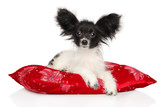 Continental Toy Spaniel puppy lying on red pillow