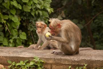 Monkeys © Angelika Pest