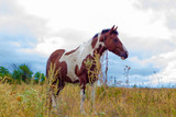 Beautiful horse in the field