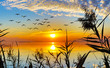 puesta de sol entre los arboles del lago