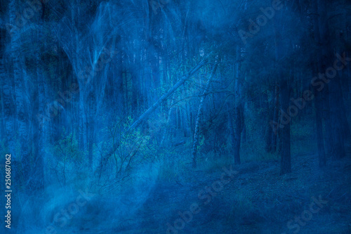mysterious night wilderness covered with blue fog fantastic forest with tall trees - 250687062
