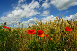 Mohn im Kornfeld mit Wolkenhimmel
