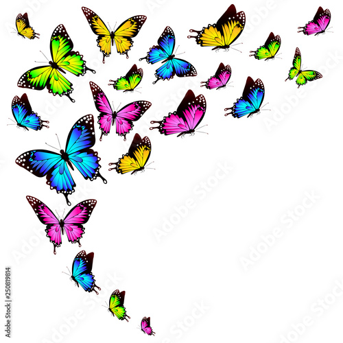 beautiful color butterflies,set, isolated  on a white - 250819814