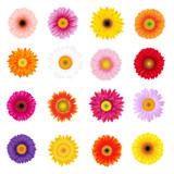 Big Colorful Gerbers Set