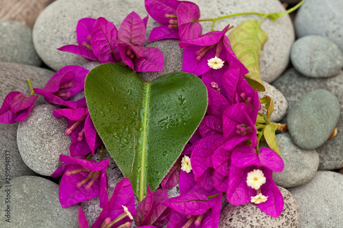 Bright Pink Bougainvillea Flowers And Leaf © Sunnydays