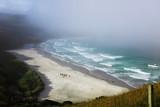 Beach Waves Wallpaper Forest