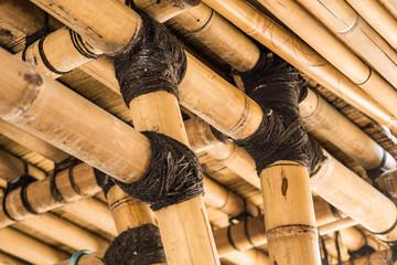 Bamboo © Xavier Allard