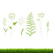 Grass Set Isolated White Background