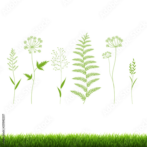 Grass Set Isolated White Background © barbaliss