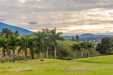 Tropical golf course with palm trees by mountain