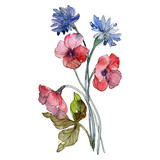 Red and blue floral botanical flowers. Watercolor background illustration set. Isolated bouquet illustration element.