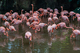 Group of flamingo