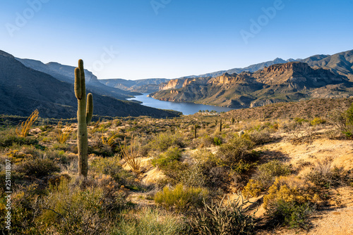 Saguaro cactus on deesert land overlooking Apache Lake © Wayne Chai