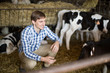 Male employee  with dairy cattle in livestock farm