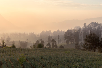 Sunrise in cemoro lawang near mount Bromo