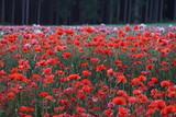 Blume,natur,sommer,frühling,wasser,erde,blüte,blüten,