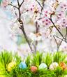 Leinwandbild Motiv Easter eggs in Grass, the flowering garden as background