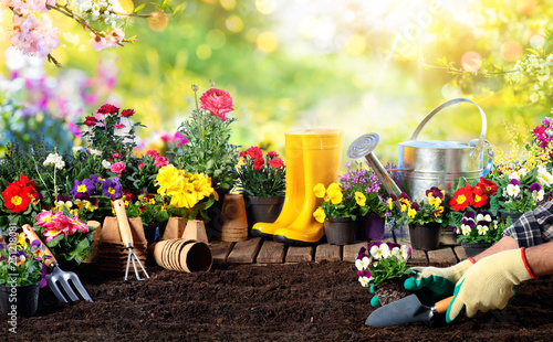 Gardening - Equipment For Gardener And Flower Pots In Sunny Garden - 251218081