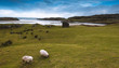 Scenic photos of the emerald isle Ireland and various areas of Galway along the ocean and into the mountains. - 251258266