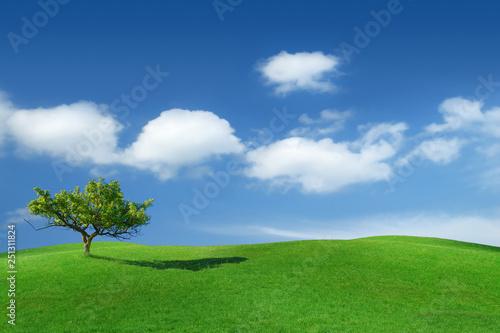 Idyllic landscape, lonely tree among green fields - 251311824