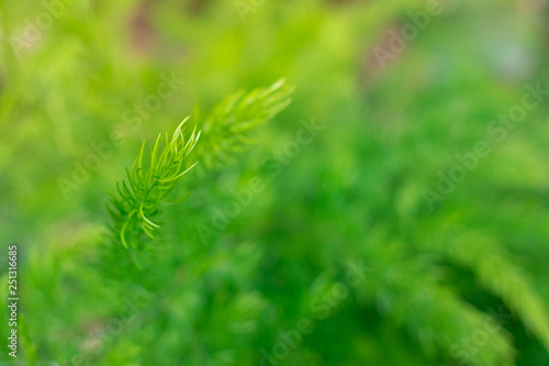Close up Treetops green Background for text - 251316685