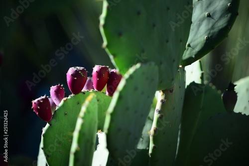 cactus in garden - 251326425