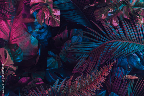 Creative fluorescent color layout made of tropical leaves. Flat lay neon colors. Nature concept. - 251353227