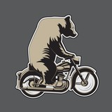 Bear riding a motorcycle on a gray background. Vector illustration .