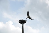Storch2