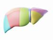 3d rendered illustration of the liver lobes