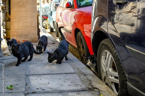 A group of stray cats look for food on a sidewalk in the Plaka district of Athens, Greece. © Kirk Fisher