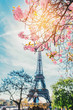 Cherry blossom branch with Eiffel Tower on background.