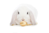 A golden Easter Egg and cute white Bunny.
