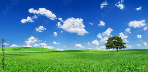 Idyll, panoramic landscape, lonely tree among green fields